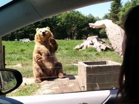 身懷絕技,這隻熊是人假扮的吧?